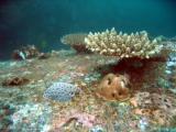 Grouper Point, Mahé Island