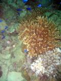 2nd dive site, the Aquarium, Beau Vallon