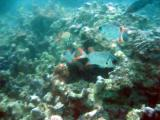 Hopefully, over time, the Seychelles reefs will recover