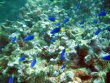 The Aquarium, off Beau Vallon Beach, Mahé Island