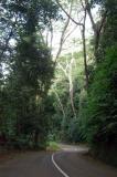 Chemin Forêt Noire