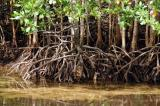 Mangroves, Port Launay Marine National Park