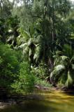 Wetlands behind Anse Soleil