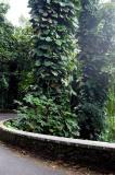 Jungle along Chemin La Misère