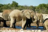Elephants spraying themselves at the waterhole