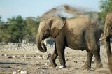 Elephants taking a dust bath after visiting the waterhole