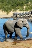 Elephant in the waterhole