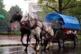 Wagon with 2 horses in the rain at Zakopane