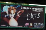 Cats in Moscow