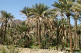 Date palms, Madhah