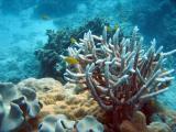 Eddy Reef (Mission Beach)