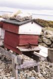 Beekeeping in N. Ireland
