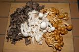 black trumpet chanterelle, beech and honey mushrooms