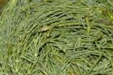 florida green sea beans