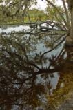 Myakka River...Overcast....photoshopped......