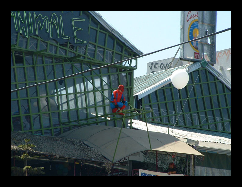 Spider Man in TJ