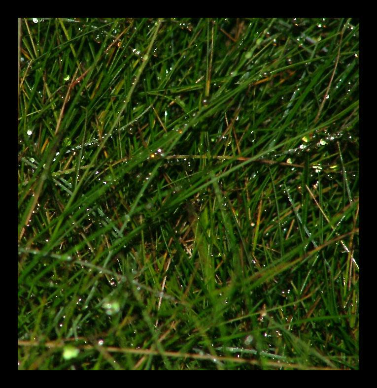 Wet grass at night.