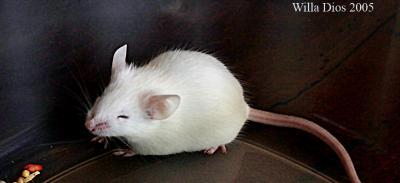 Poor Little Mouse.jpg
