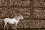 Pony and Flint Wall (Best Viewed at Original)
