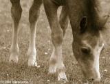 20050627 Pony Foal