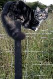 20050701 Pole Cat