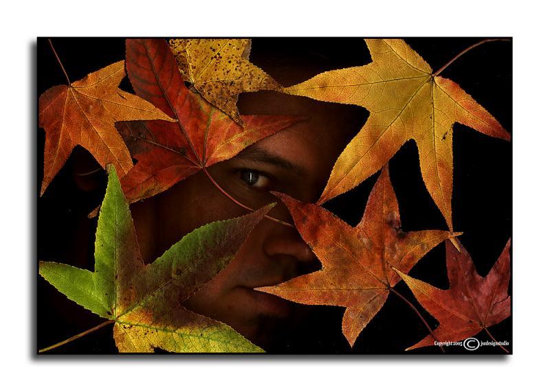 Leaf Man SP <p> October 28