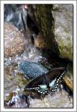 PDX Zoo 01.jpg