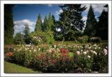 Rose Garden 07.jpg