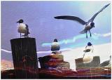 Gulls Mod