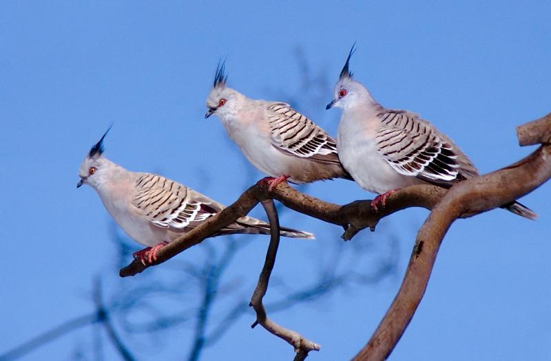 Birds Of A Feather - JDU
