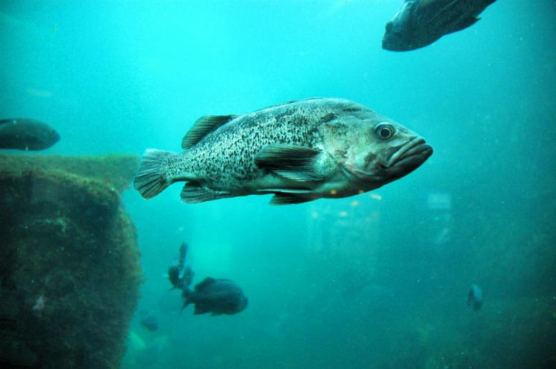 Monterey Bay Aquarium display