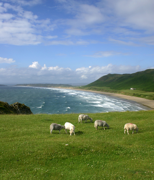 Grazing on the Gower