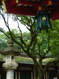 Opposing lanterns