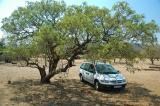 We parked our car under a shady tree