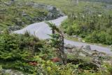 Stunted Pine and Auto Road.jpg