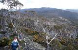bp Descending Mt Kelly's Southern Ridge.jpg