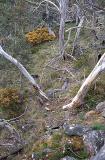 bq View From Rock On South Kelly Ridge.jpg