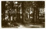 Leysdown Woods