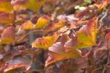 Vine Leaves.jpg