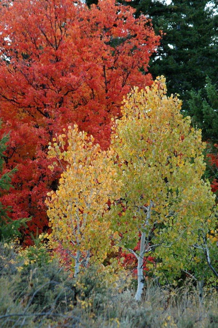 Buckskin Autumn Scene DSC_6702.JPG