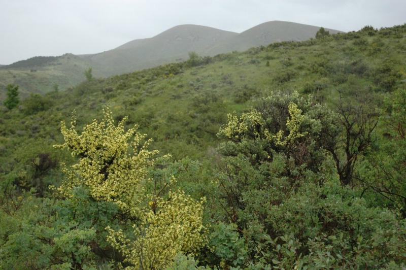 Camelback mountain DSC_4695.JPG