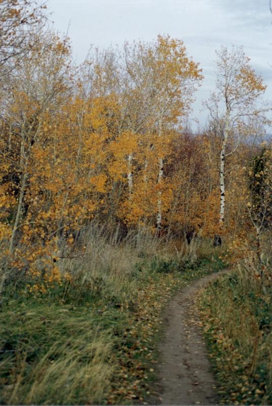 City Creek Trail.jpg