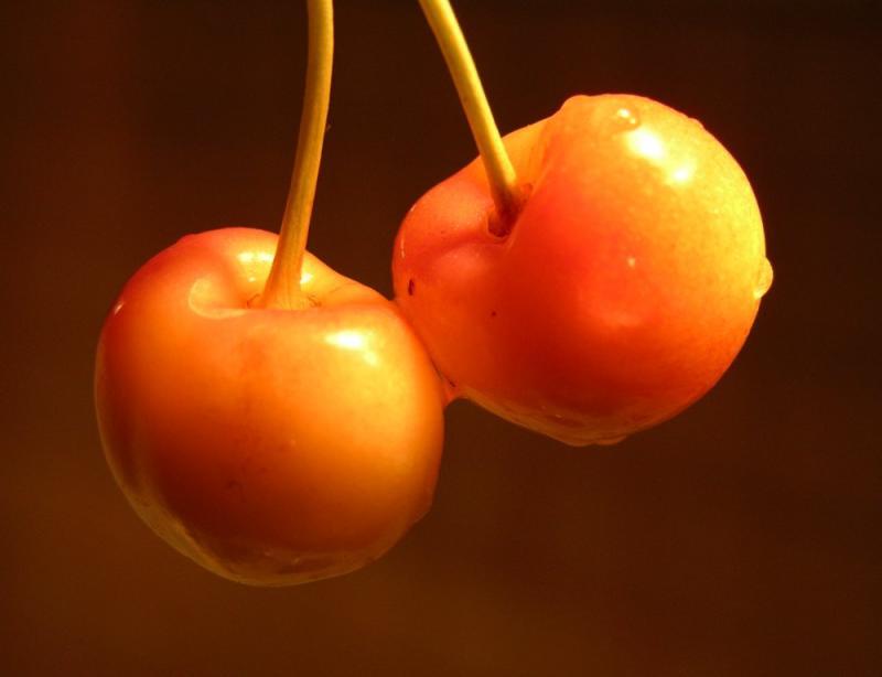 Cherries from Ruth Moorheads Tree DSCN6574