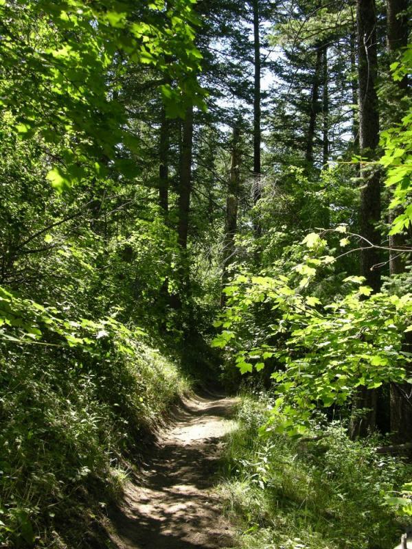 Crestline Trail Scout Mtn DSCN6627.JPG