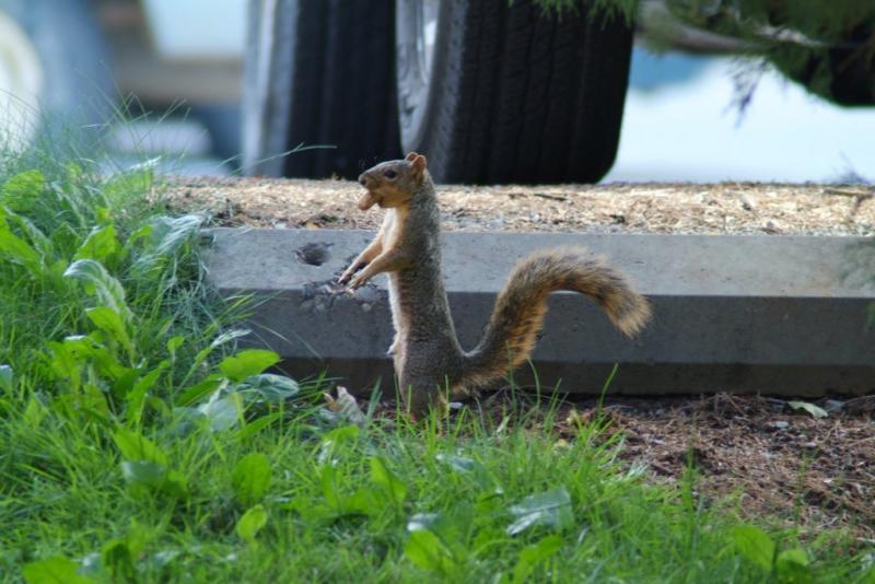 Idaho State University Fox Squirrel Man DSCF0095.JPG