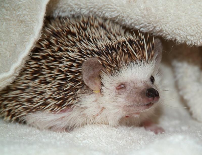 Desmond Hugh the Hedgehog DSCF0054.JPG