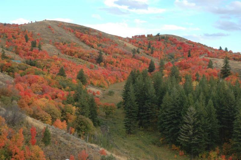 Buckskin Autumn Scene DSC_6680.JPG