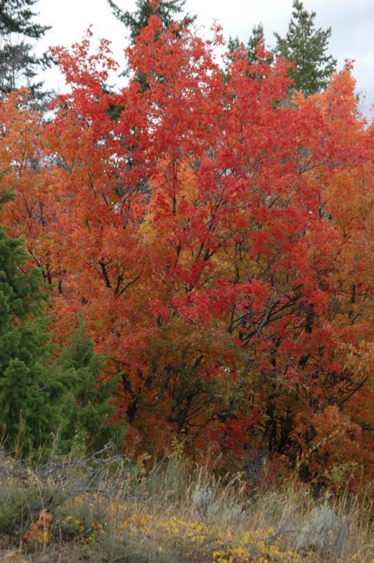 Buckskin Autumn Scene DSC_6706.JPG
