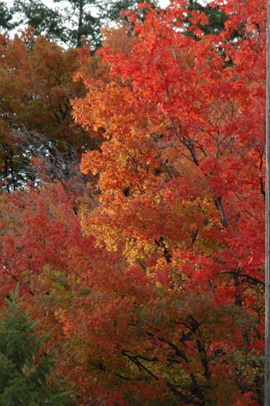 Buckskin Autumn Scene DSC_6736.JPG