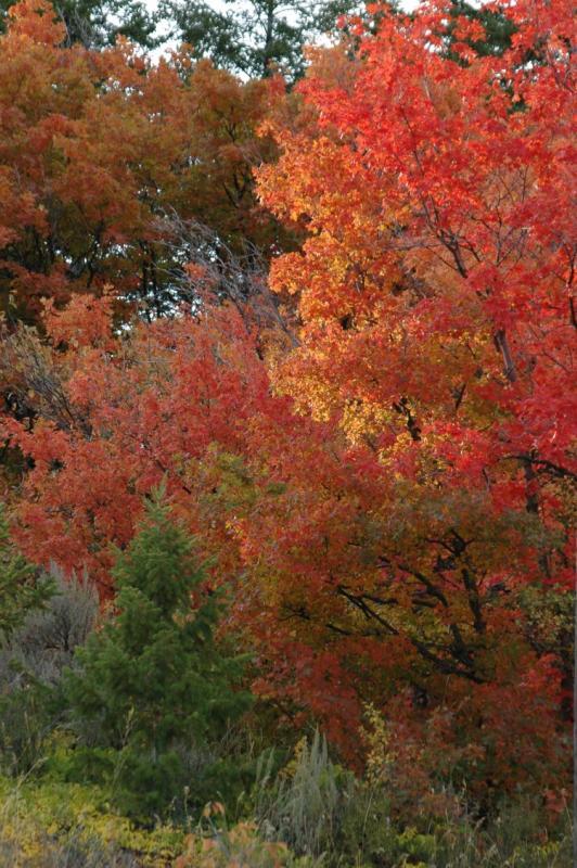 Buckskin Autumn Scene DSC_6741.JPG